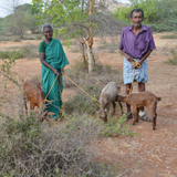 Self employment Assistance-Goat rearing